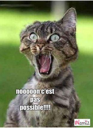 un-chat-tres-etonner-34782