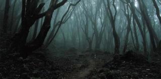 Une Forêt Obscure de Fabio M.Mitchelli
